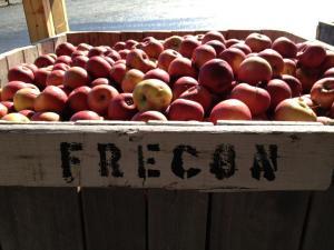 Frecon peaches